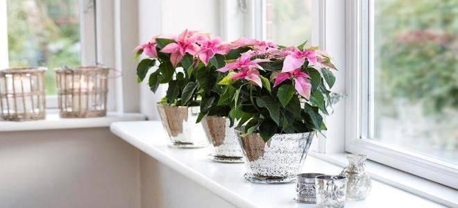 Фен шуй цветов: комнатные растения по фен шуй и их значение