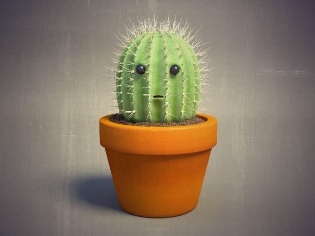 Приметы: можно ли держать кактусы в доме (хорошо или плохо)