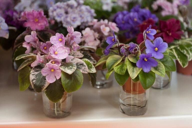Цветы в доме: приметы и суеверия, вопросы о магических свойствах растений