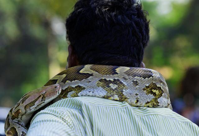 Мужчине приснились змеи