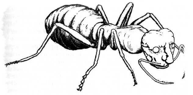 Мурианы — муравьи-оборотни и забытые божества