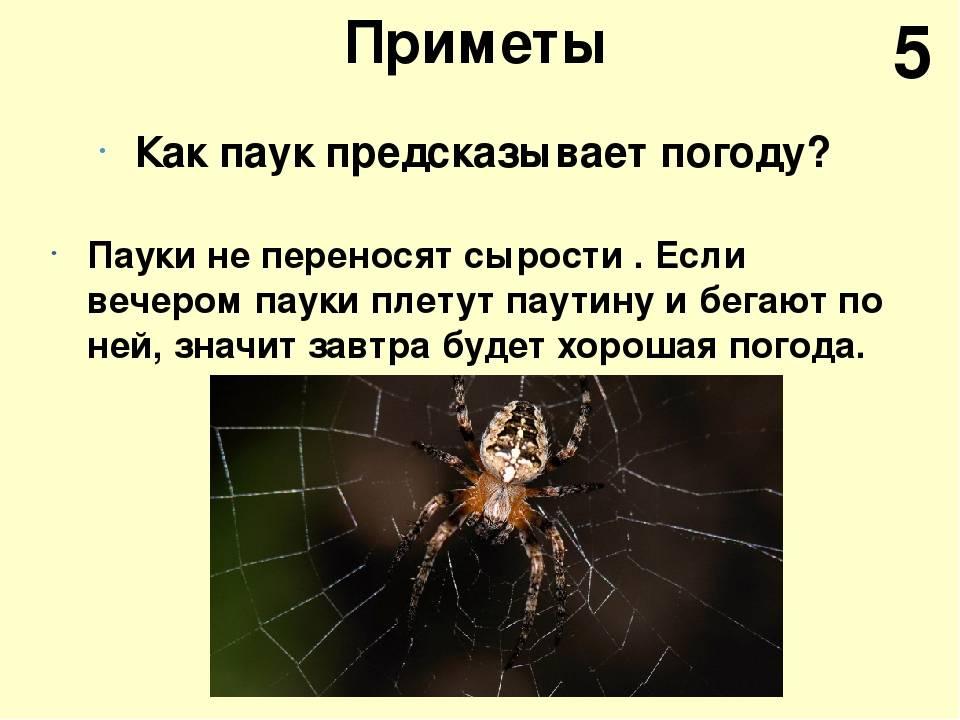 Паук: примета о членистоногом в доме, квартире, машине или теле человека, толкование с учетом цвета паука.