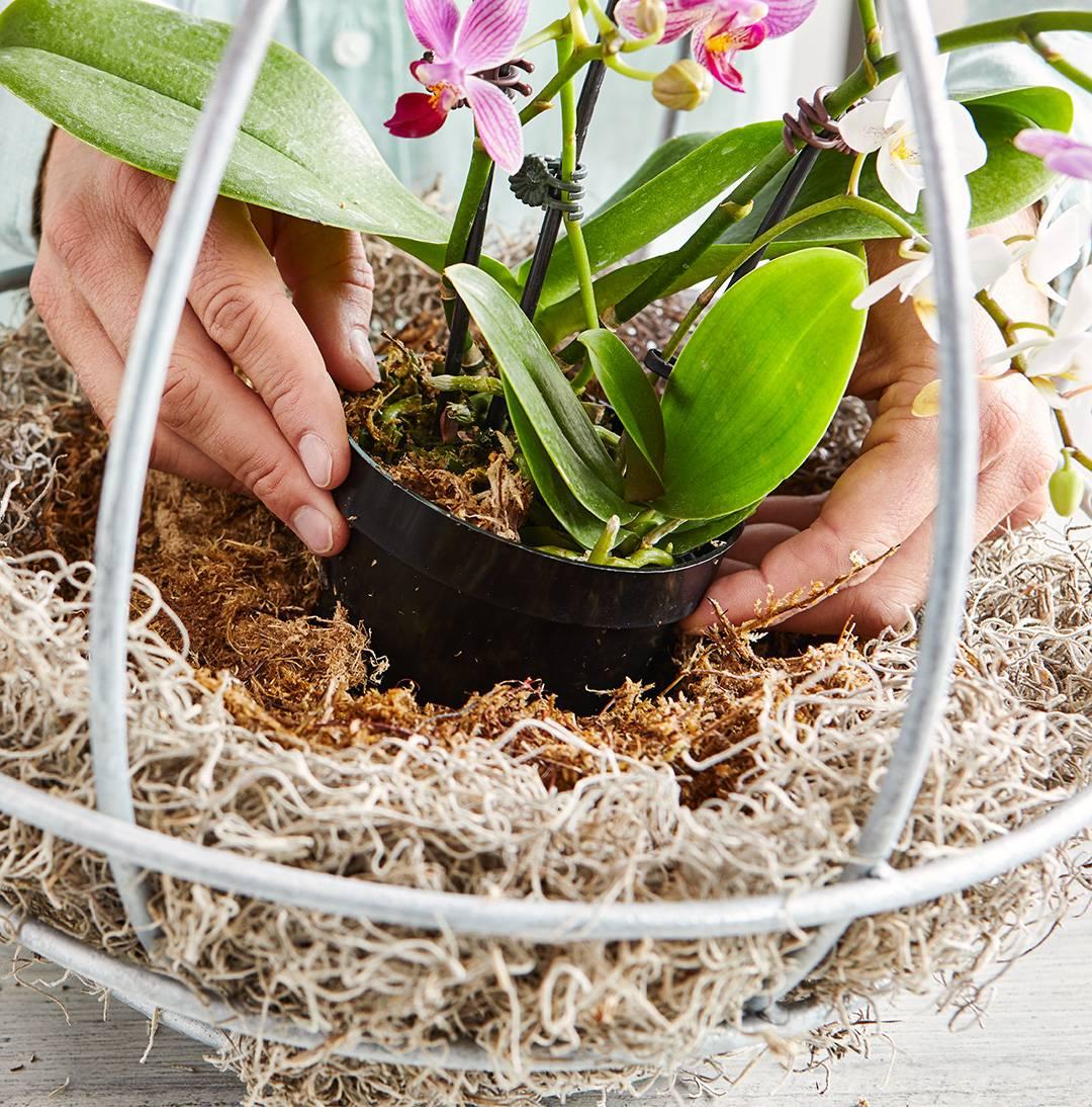 Можно ли держать дома орхидею: приметы и суеверия