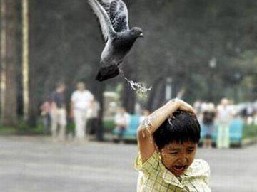 Примета птица накакала на голову, руку, одежду