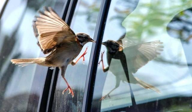 Если птица врезалась в окно и улетела, примета