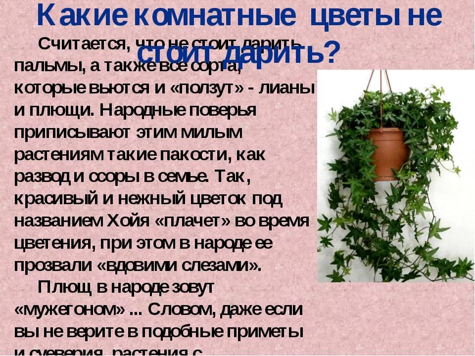 Кротон - уход в домашних условиях, размножение листом и черенками, приметы и суеверия