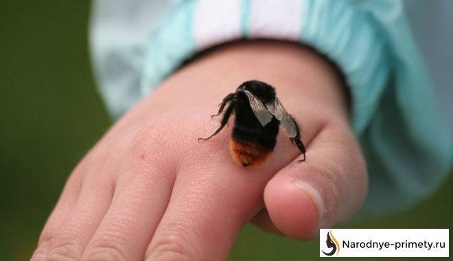 Примета: бабочка села на человека – к чему садится на голову, руку, грудь, нос, плечо?