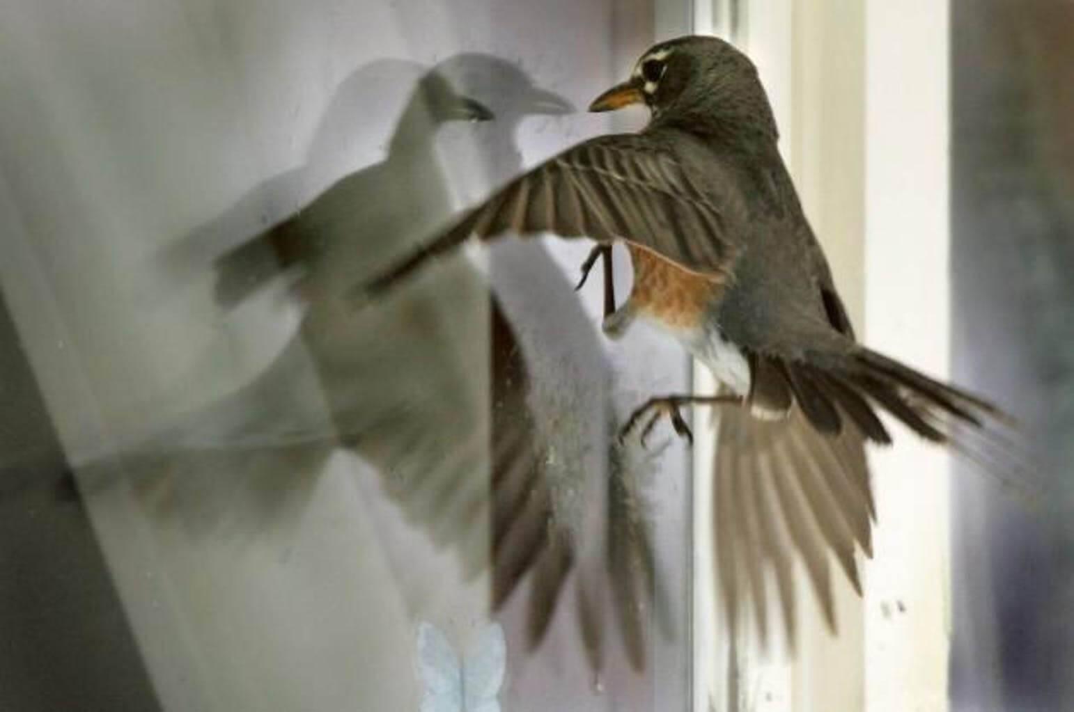Птичка стучит в окно машины примета. приметы - птица стучит в окно - права граждан