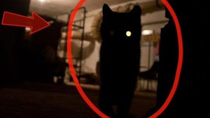 Как вызвать египетского кота исполняющего желания днем. как вызвать духа исполняющего желания: советы начинающим волшебникам