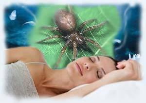 Пауки во сне: значения по разным сонникам