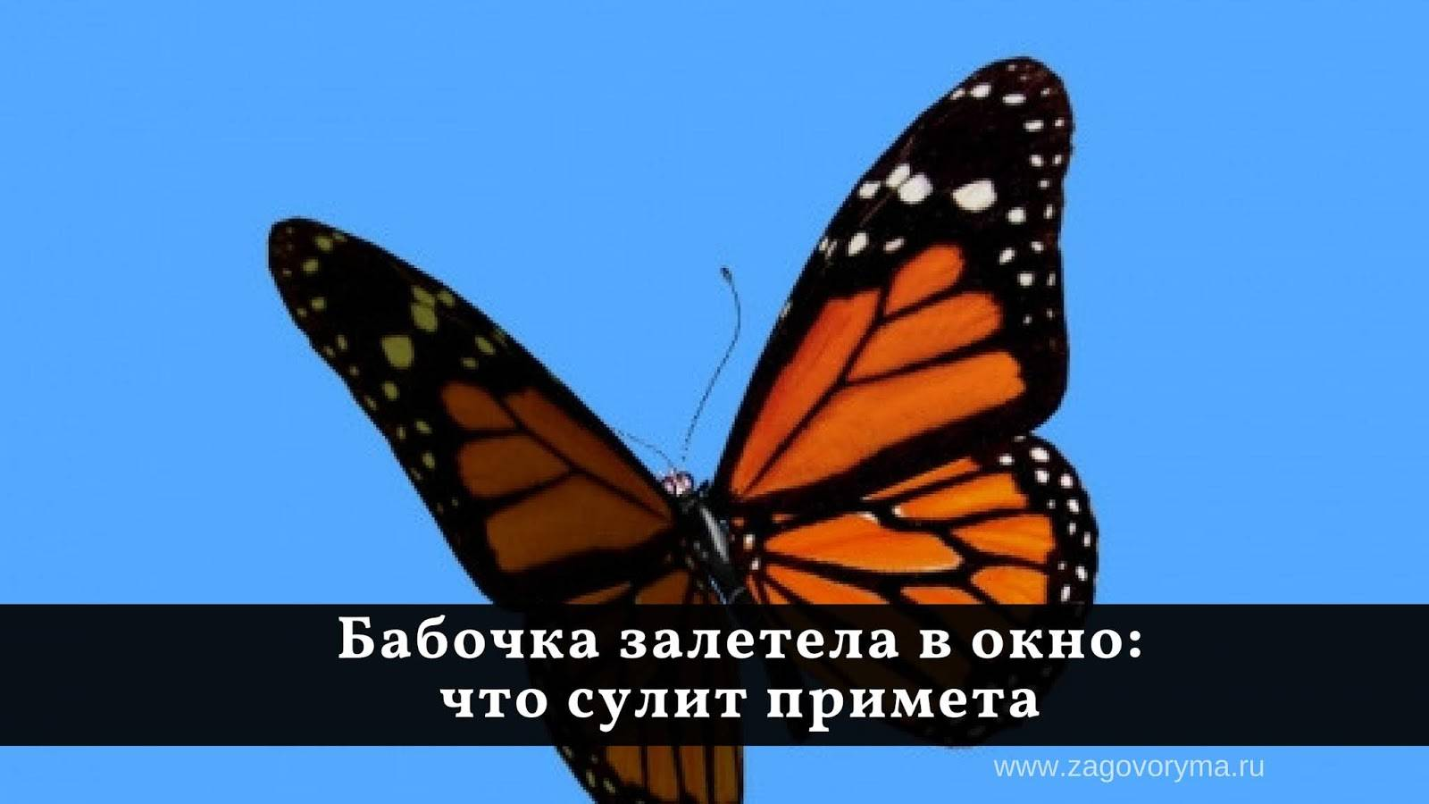 Что значит, если на человека села стрекоза или бабочка: народные приметы что значит, если на человека села стрекоза или бабочка: народные приметы