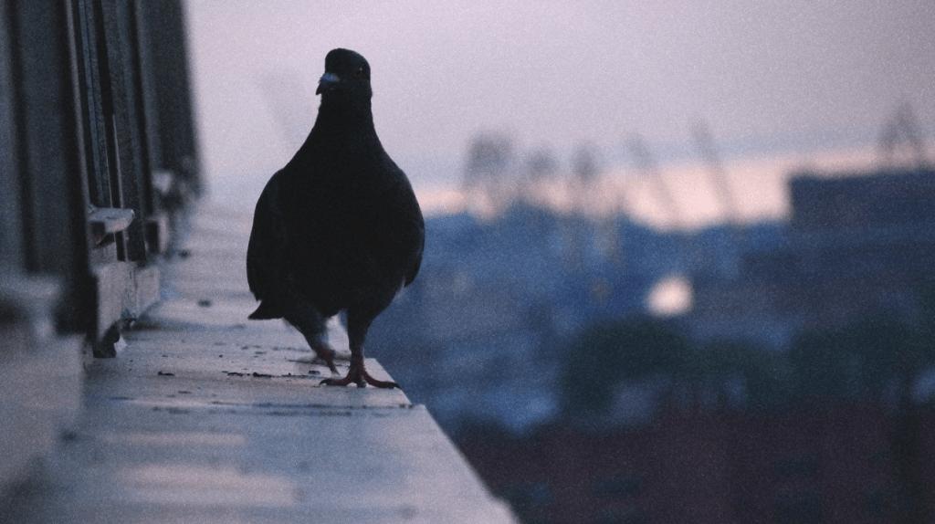 Птица села на окно: примета