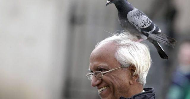 Птица нагадила на плече, голову, одежду – к чему это, толкование приметы