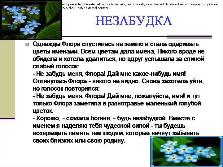 Диковинные легенды и поверья о весенних цветах   бытовая магия   яндекс дзен