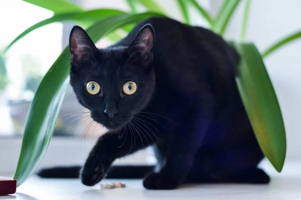 Приметы и суеверия про рыжих котов