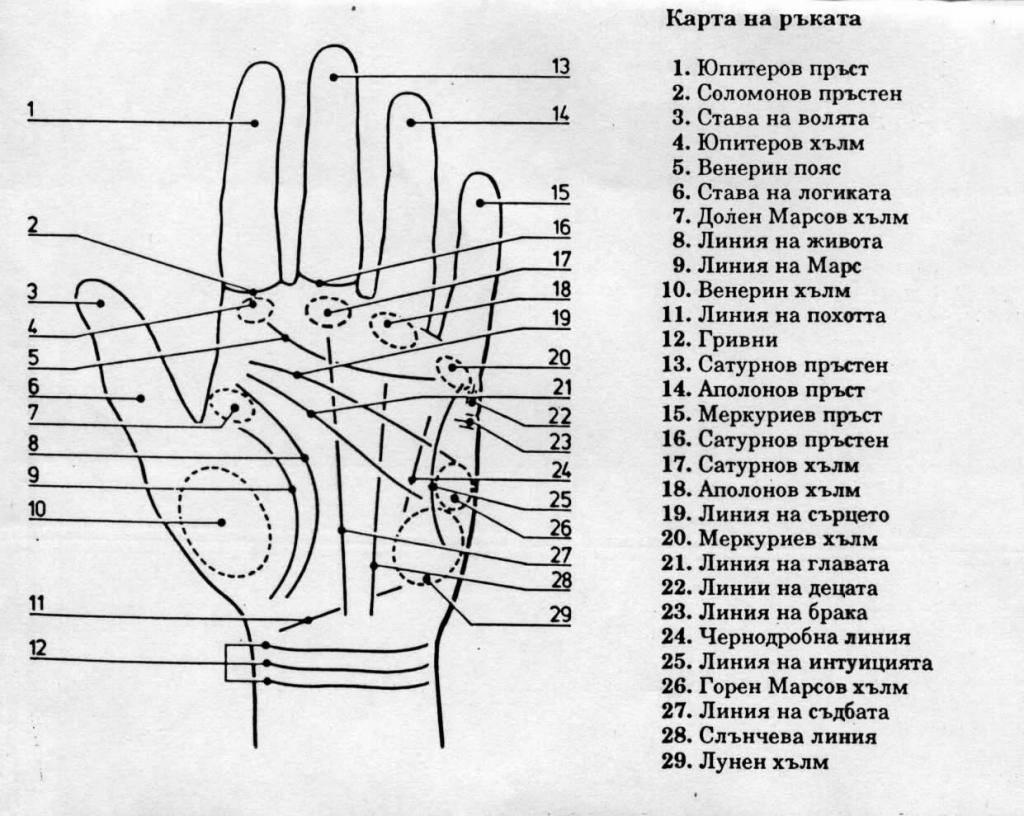 Хиромантия: разъяснения по руке – гадание по линиям и знакам на руках