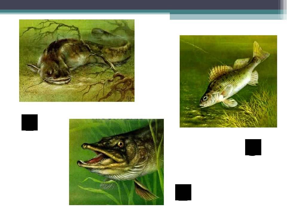Ломариопсис линеата: особенности содержания папоротника в аквариуме