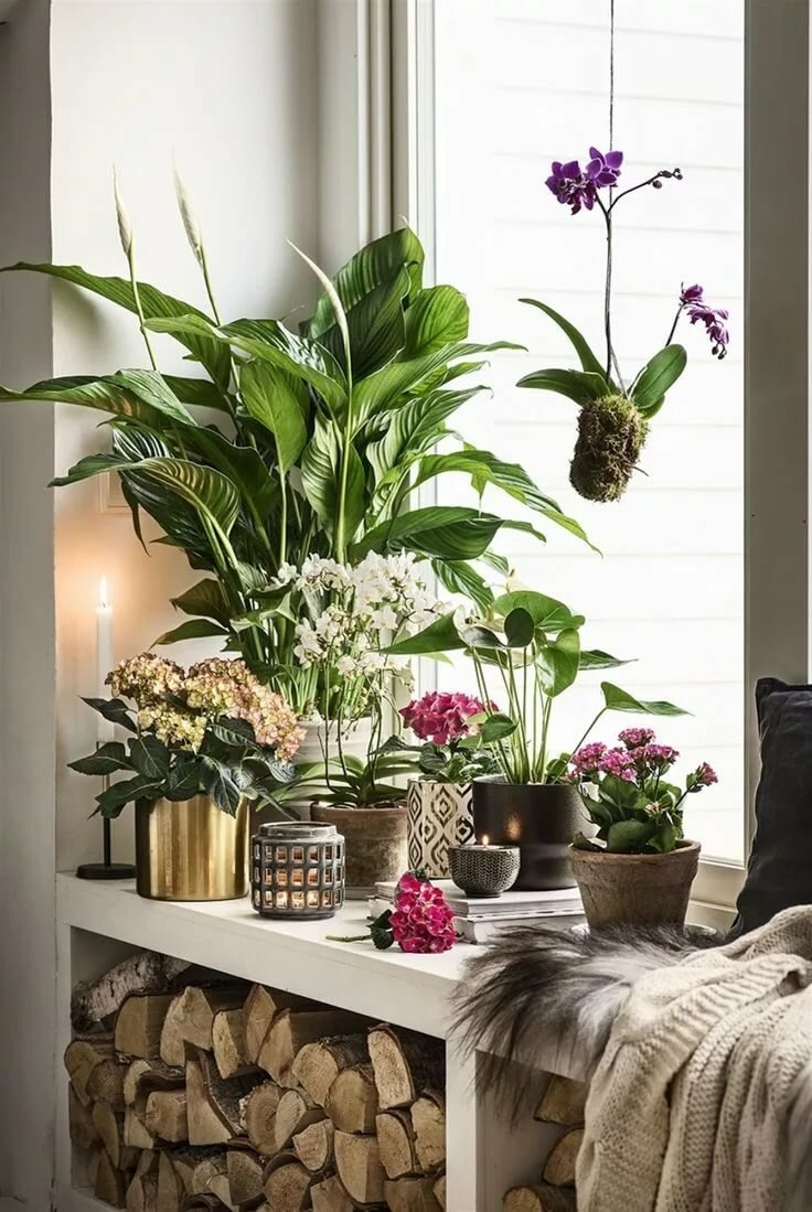 Приметы и суеверия — цветы в доме, приносящие деньги, здоровье и благополучие