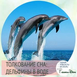 Сонник дельфины в озере. к чему снится дельфины в озере видеть во сне - сонник дома солнца