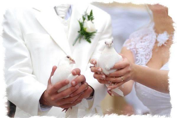 Что означает прилетел голубь. приметы о голубе, что символизирует белый, к чему поселился рядом