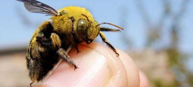 Приметы про жуков: о чем говорит появление в доме, трактовка с учетом цвета и других особенностей