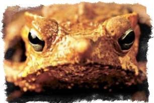 Лягушка в фен шуй: что означает и где должна стоять