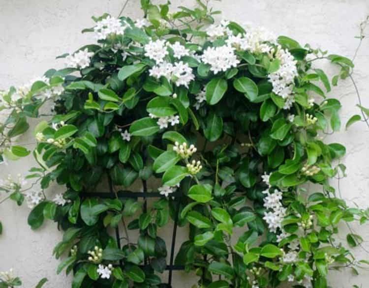 Травы-обереги для дома и семьи — как их использовать
