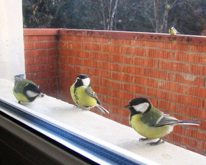 Что означает примета, если на балкон залетела птица: дурной и хороший знак