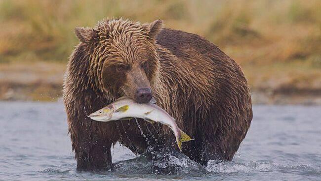 ???? к чему снится медведь — различные толкования сна   видеть во сне медведя (бурого, белого), убегать от него