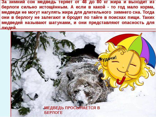 К чему снится медведь, сонник – медведь во сне