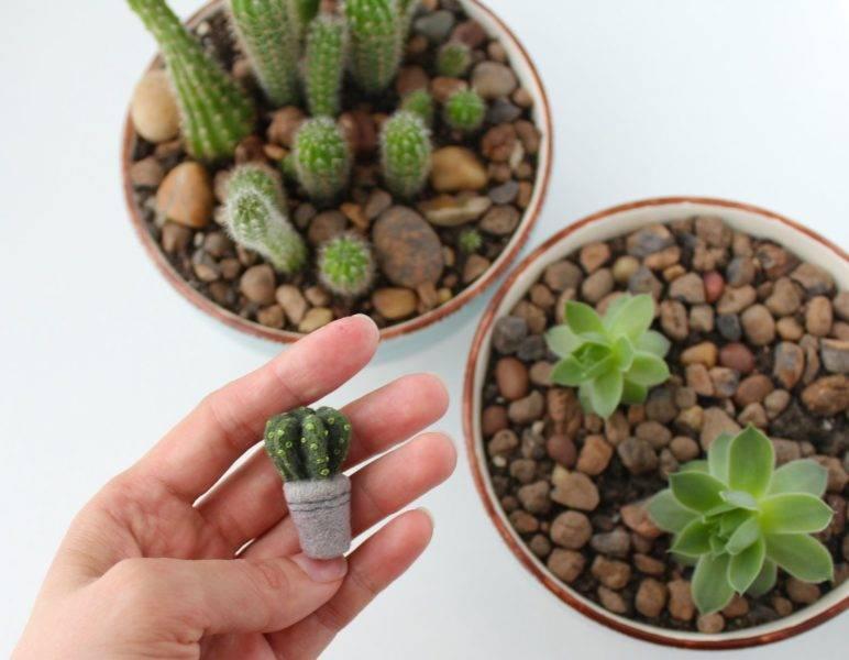 Можно ли держать кактусы дома кактус домашний польза и вред народные приметы и суеверия кактус в подарок значение примета