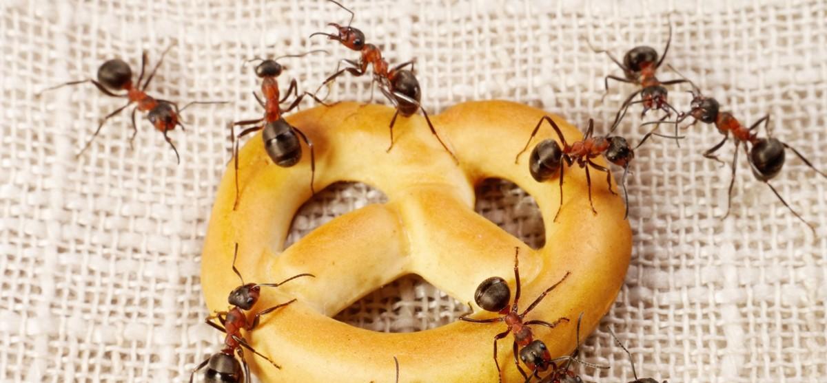 Приметы про муравьев