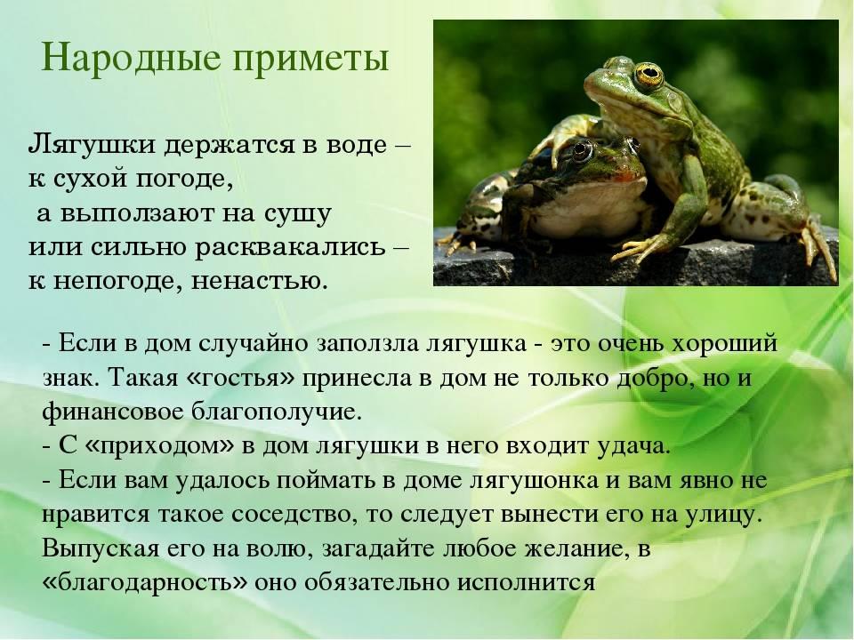 Правильно размещаем лягушку богатства по фен шуй