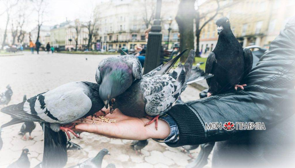 Примета, если птица накакала на голову или одежду