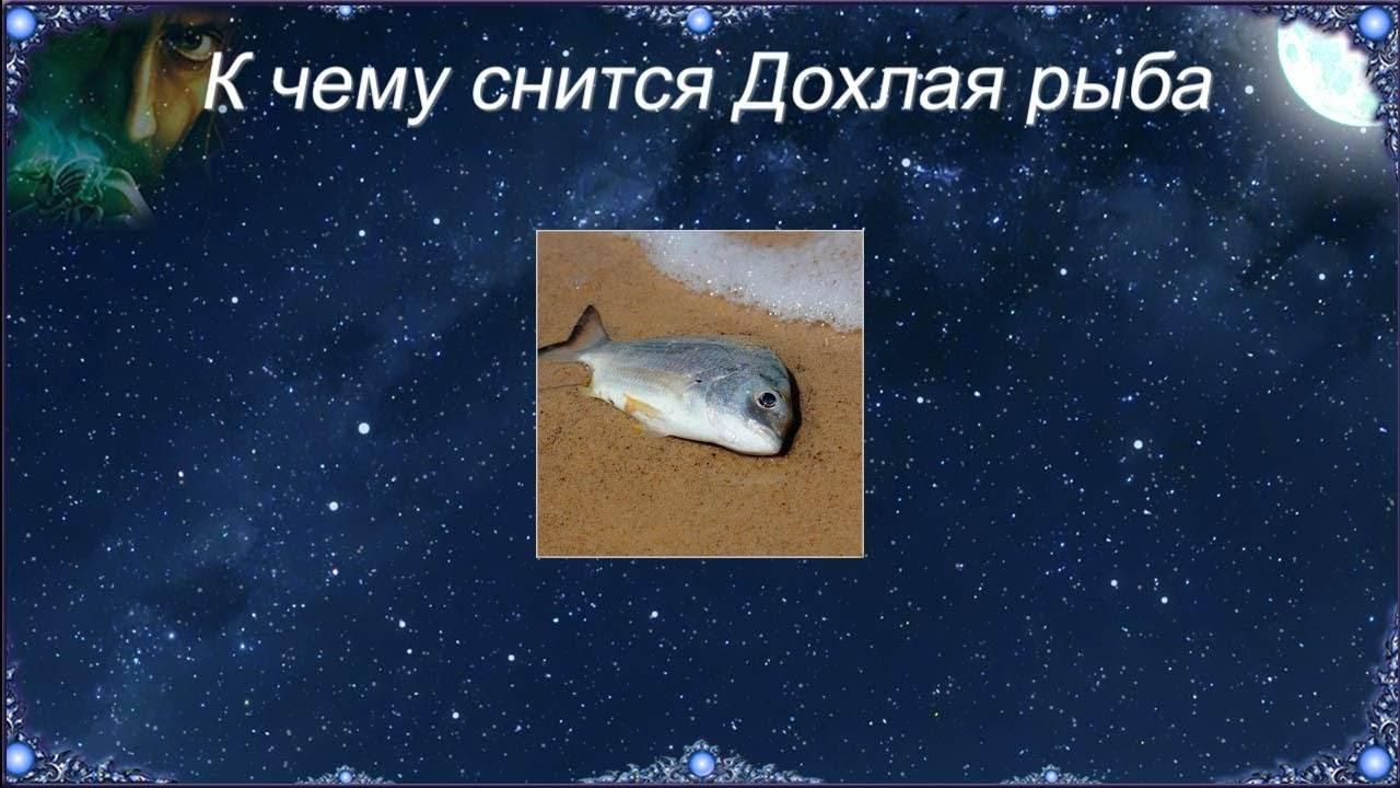Рыба свежая но мертвая