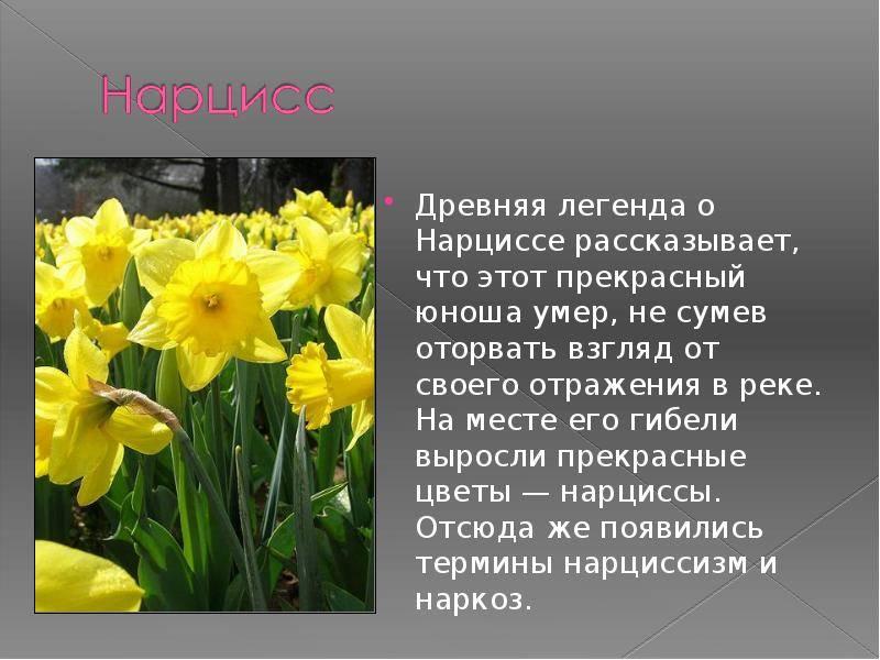 Легенды и поверья о весенних цветах разных стран   магия любви