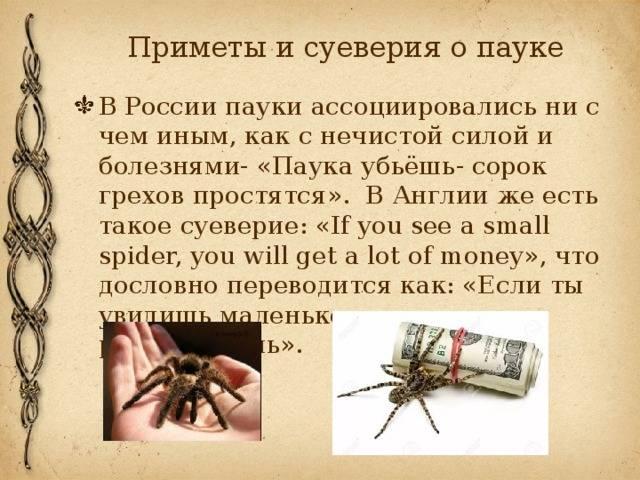 Приметы о муравьях в доме