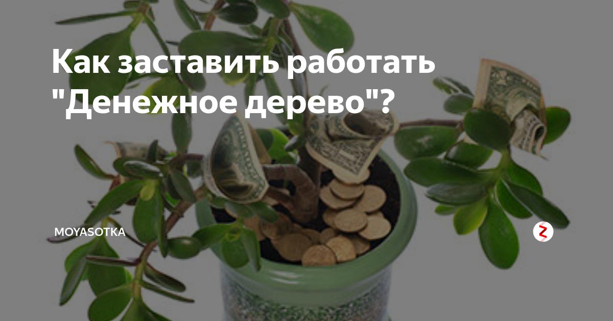 Приметы о денежном дереве: как привлечь богатство в дом?