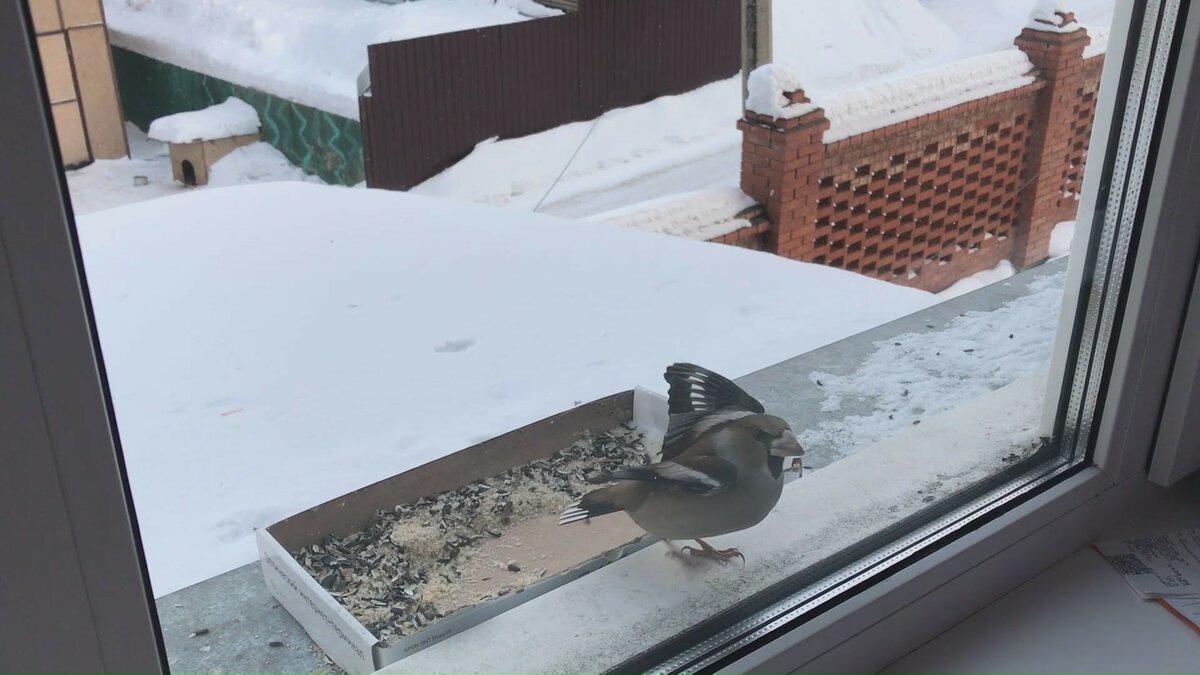 Примета - к чему птица бьется в окно дома или офиса