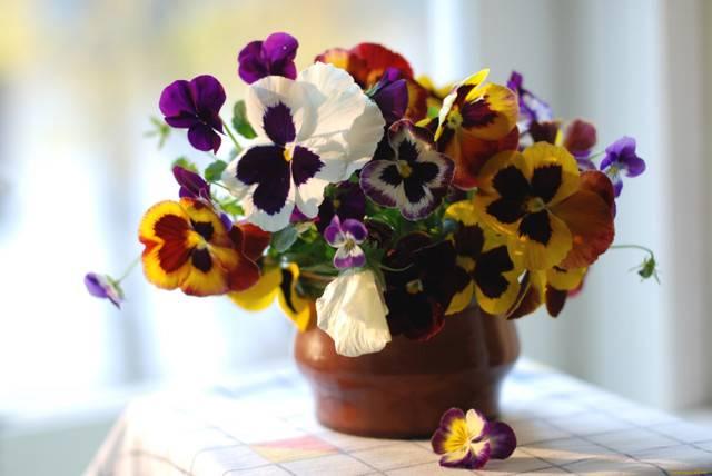 Фиалка в доме: значение и толкование примет и суеверий
