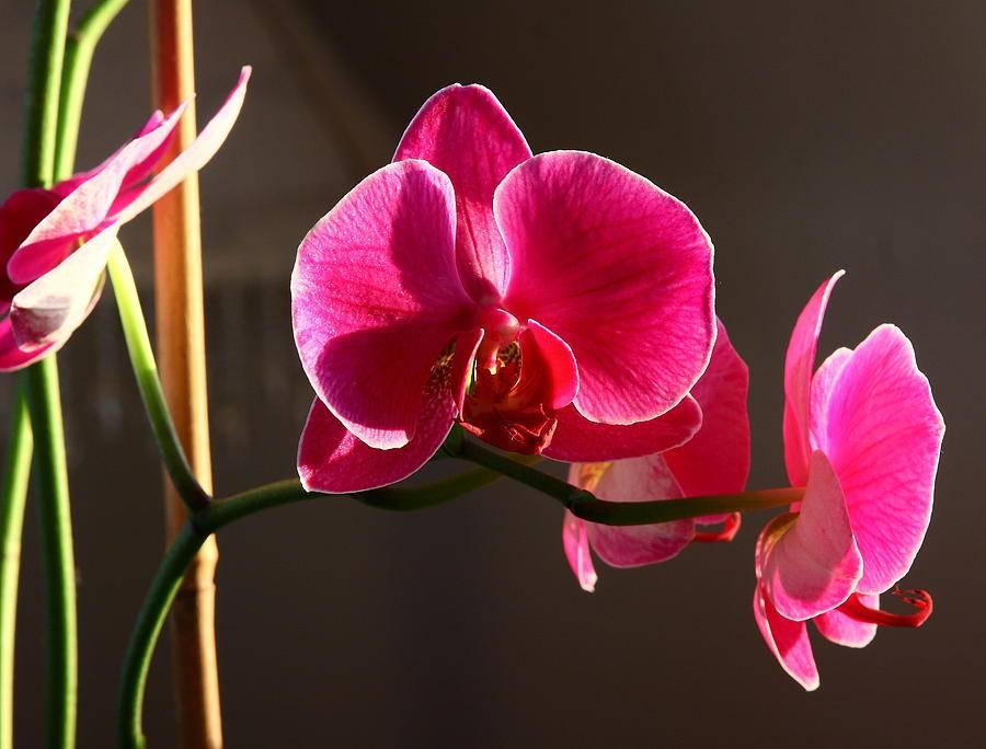 Почему нельзя держать дома орхидеи: народные приметы и факты