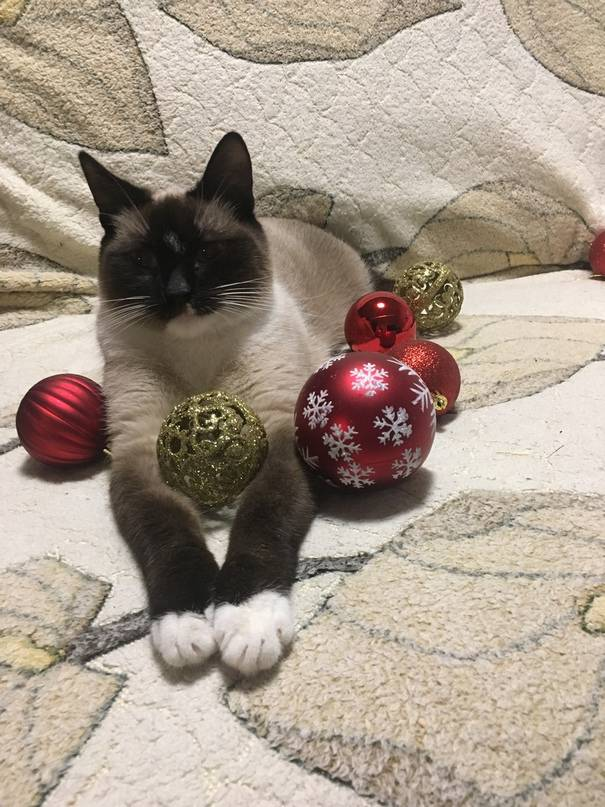 Приметы и поверья, связанные с серой кошкой в доме