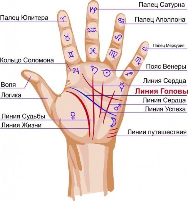 Пояс венеры на руке: значение