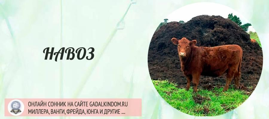 К чему снится корова, толкование сна по соннику