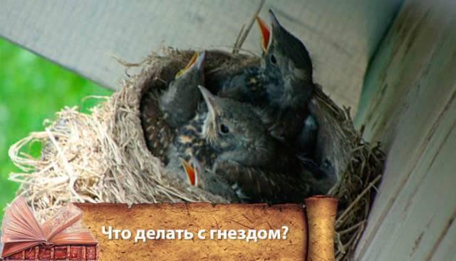 Осы свили гнездо: приметы и суеверия