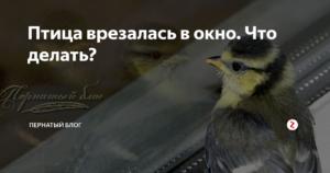 Примета: птица ударилась в окно и улетела, к чему это? ? приметы животные