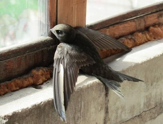 Птица ударилась в окно и разбилась, что означает примета