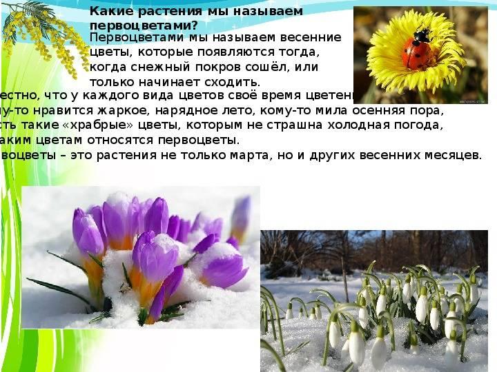Природные символы в русско-украинской народной культуре.