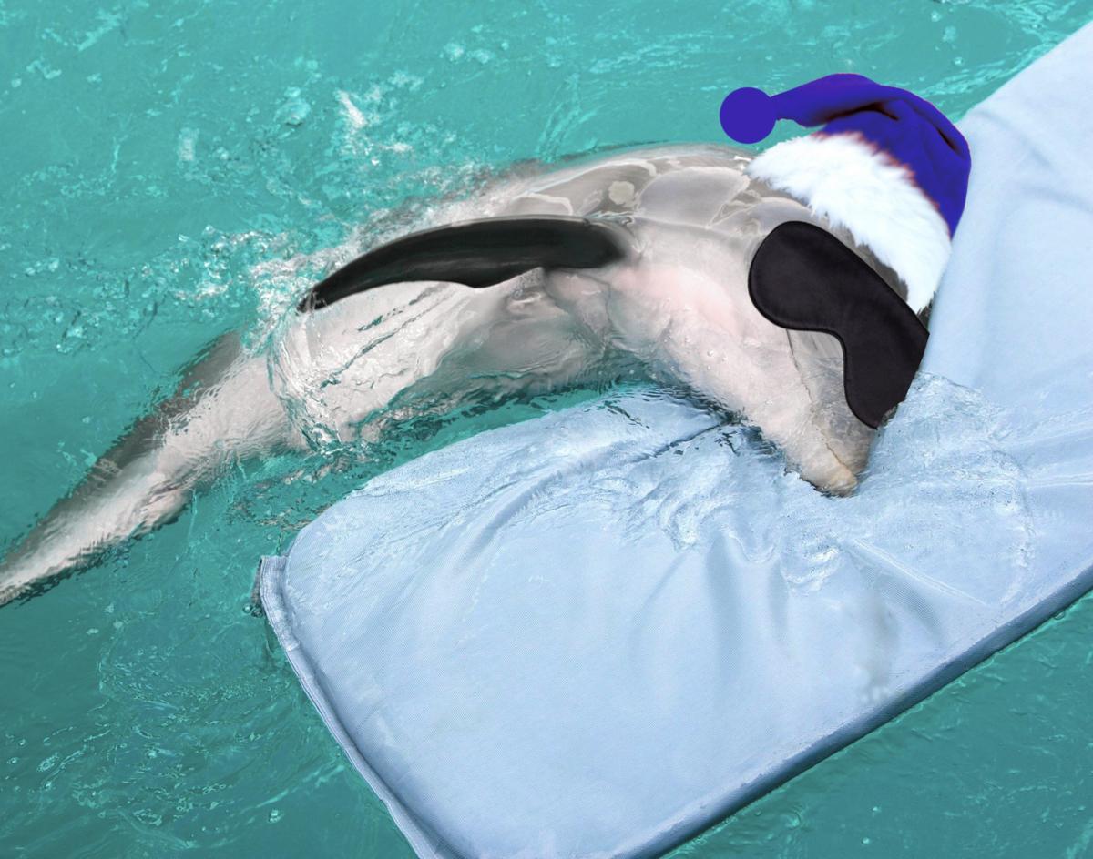 К чему снятся дельфины женщине, много дельфинов во сне.