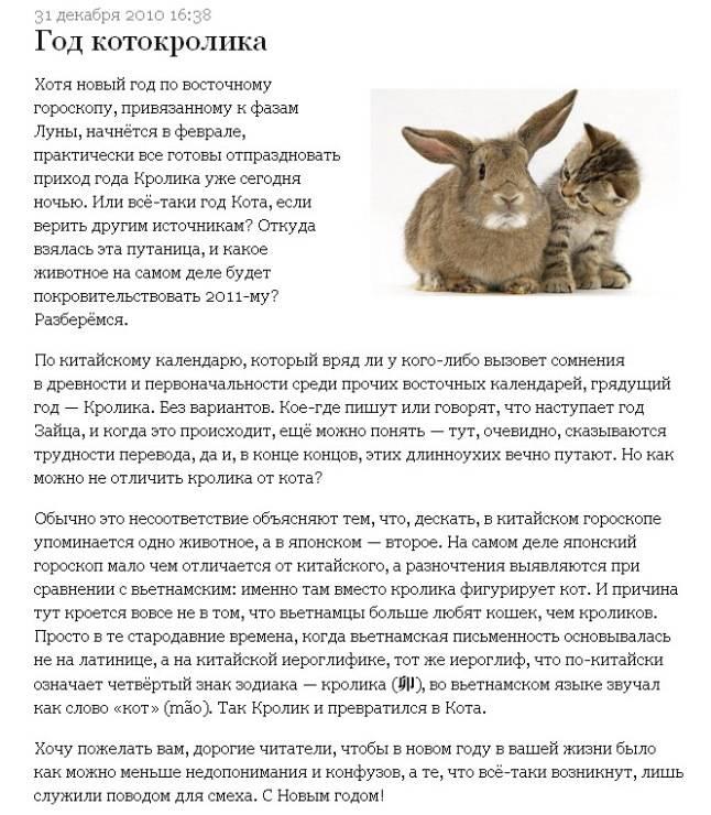 Год кролика (кота) (26 фото): когда будет год кролика? характеристика представителей знака. кто из знаменитых людей родился в год кролика?